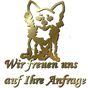 Chihuahua - Anfrage